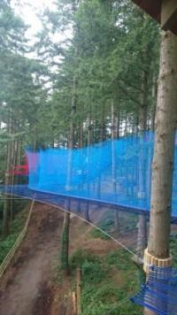 blog Tree Top Nets 3